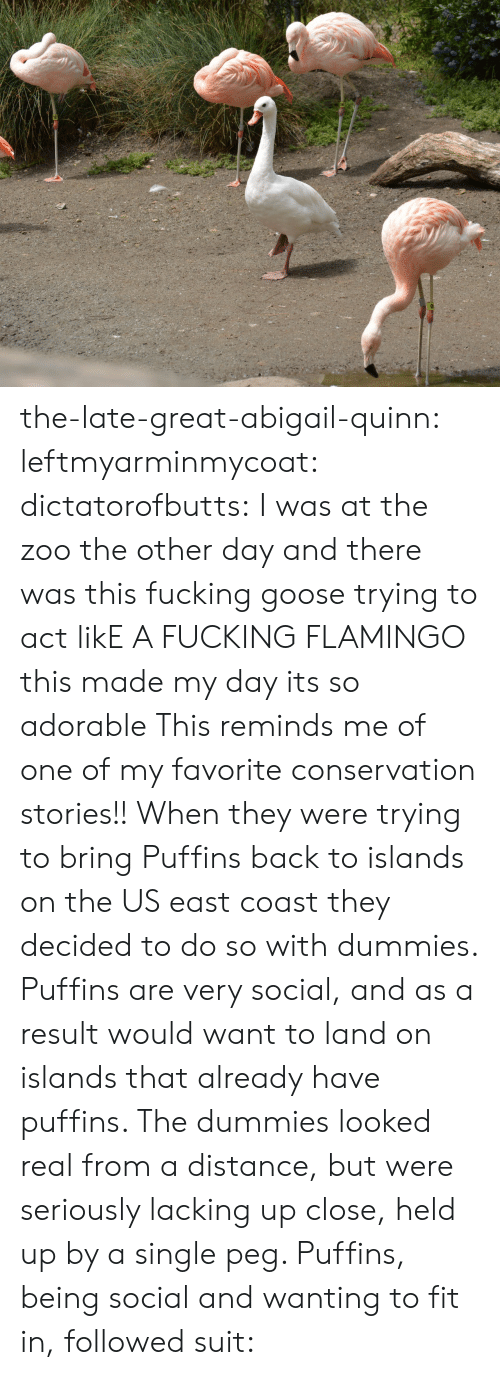 Fucking, Target, and Tumblr: the-late-great-abigail-quinn:  leftmyarminmycoat:  dictatorofbutts:  I was at the zoo the other day and there was this fucking goose trying to act likE A FUCKING FLAMINGO  this made my day its so adorable  This reminds me of one of my favorite conservation stories!! When they were trying to bring Puffins back to islands on the US east coast they decided to do so with dummies. Puffins are very social, and as a result would want to land on islands that already have puffins. The dummies looked real from a distance, but were seriously lacking up close, held up by a single peg. Puffins, being social and wanting to fit in, followed suit: