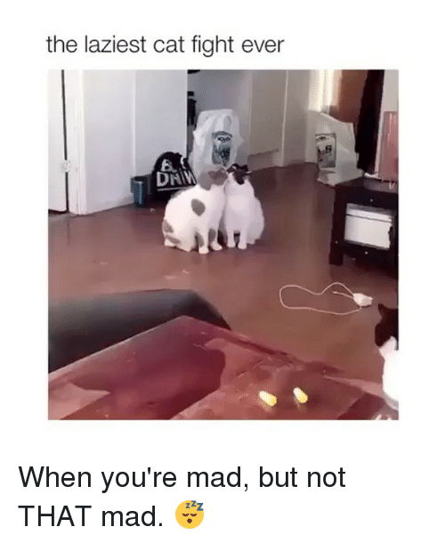 fightings: the laziest cat fight ever  6. When you're mad, but not THAT mad. 😴