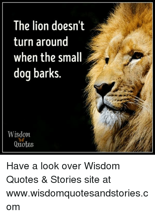 The Lion Doesnt Turn Around When The Small Dog Barks Wisdom ไอ้ Adorable Pictures Of Lion With Diss Quotes