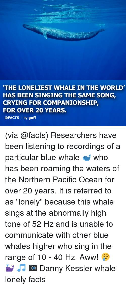 "blue whale: THE LONELIEST WHALE IN THE WORLD  HAS BEEN SINGING THE SAME SONG,  CRYING FOR COMPANIONSHIP,  FOR OVER 20 YEARS.  @FACTS | by guff (via @facts) Researchers have been listening to recordings of a particular blue whale 🐋 who has been roaming the waters of the Northern Pacific Ocean for over 20 years. It is referred to as ""lonely"" because this whale sings at the abnormally high tone of 52 Hz and is unable to communicate with other blue whales higher who sing in the range of 10 - 40 Hz. Aww! 😢 🐳 🎵 📷 Danny Kessler whale lonely facts"