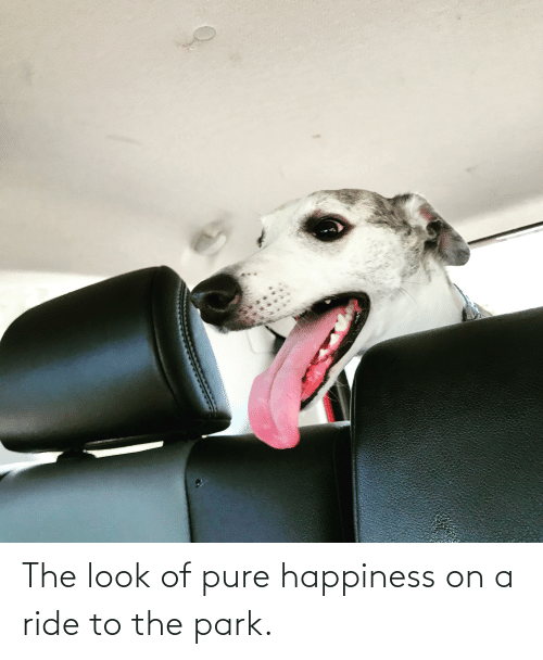 the look: The look of pure happiness on a ride to the park.