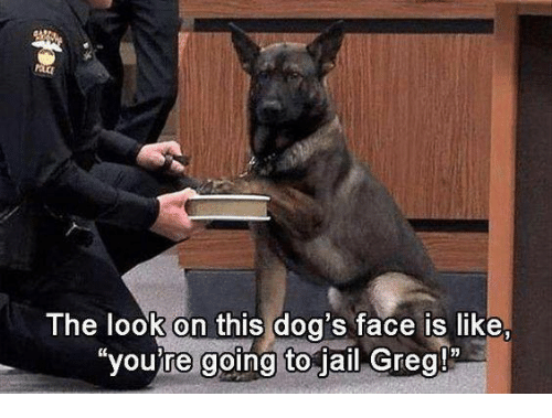 "Dog Faces: The look on this dog's face is like,  ""you're going to jail Greg!"""