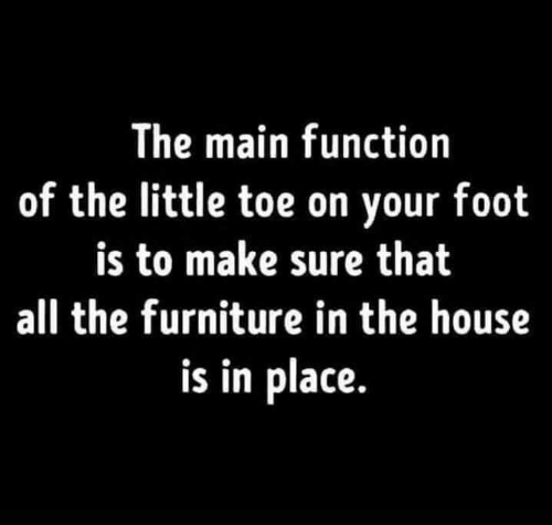 Memes, Furniture, and House: The main function  of the little toe on your foot  is to make sure that  all the furniture in the house  is in place.