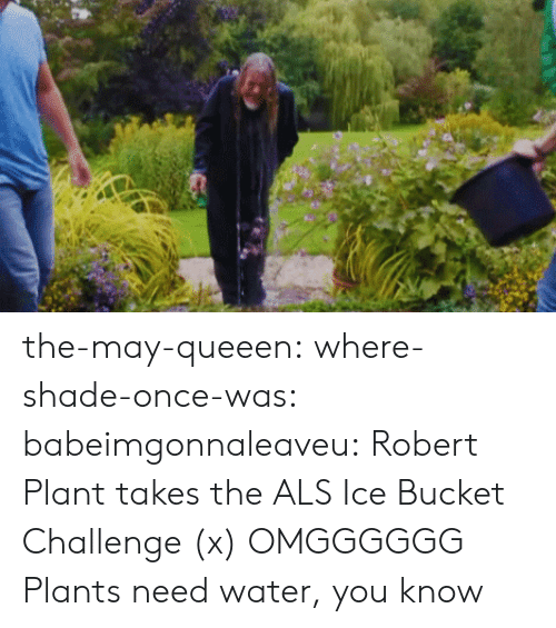robert plant: the-may-queeen:  where-shade-once-was:  babeimgonnaleaveu:   Robert Plant takes the ALS Ice Bucket Challenge (x)  OMGGGGGG  Plants need water, you know