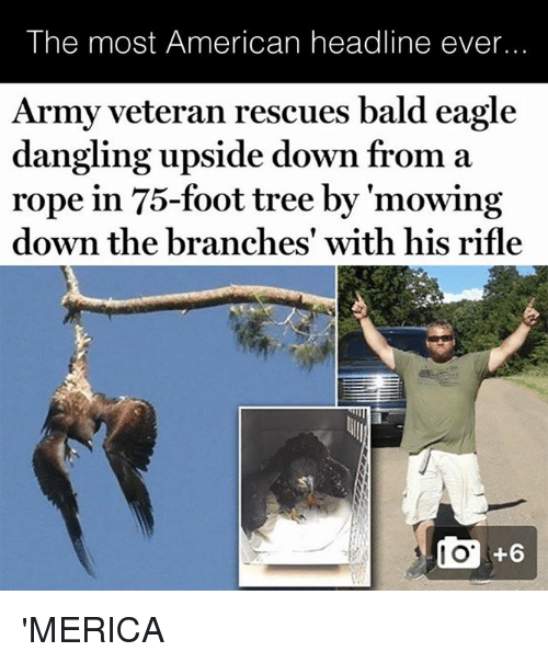 Mowing: The most American headline ever...  Army veteran rescues bald eagle  dangling upside down from a  rope in 75-foot tree by 'mowing  down the branches' with his rifle 'MERICA