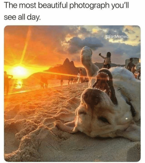 See All: The most beautiful photograph you'll  see all day.  OPetMemed