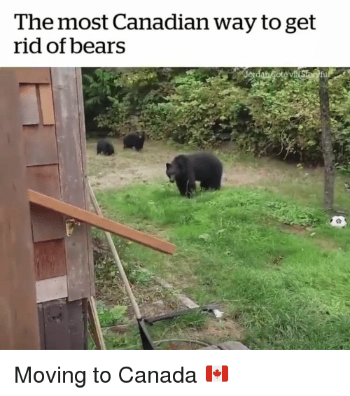 Moving To Canada: The most Canadian way to get  rid of bears Moving to Canada 🇨🇦