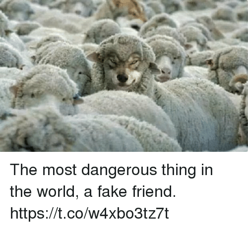Dangerous Thing: The most dangerous thing in the world, a fake friend. https://t.co/w4xbo3tz7t