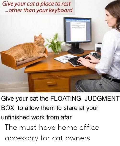 Office: The must have home office accessory for cat owners