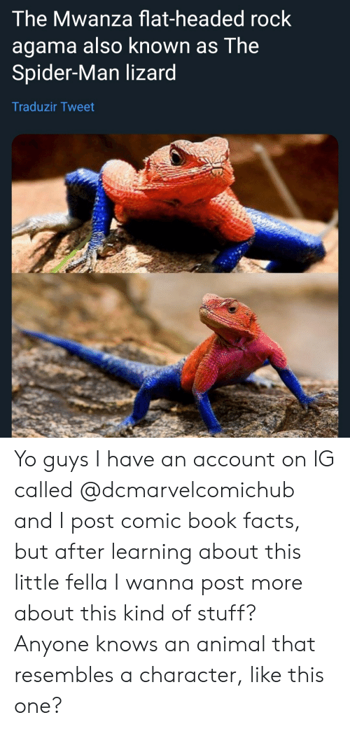 Agama: The Mwanza flat-headed rock  agama also known as The  Spider-Man lizard  Traduzir Tweet Yo guys I have an account on IG called @dcmarvelcomichub and I post comic book facts, but after learning about this little fella I wanna post more about this kind of stuff? Anyone knows an animal that resembles a character, like this one?