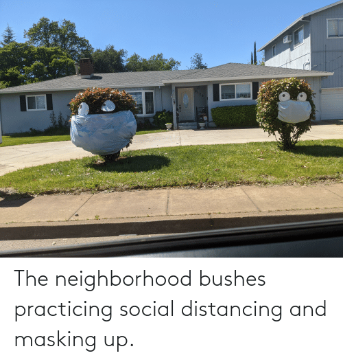 practicing: The neighborhood bushes practicing social distancing and masking up.