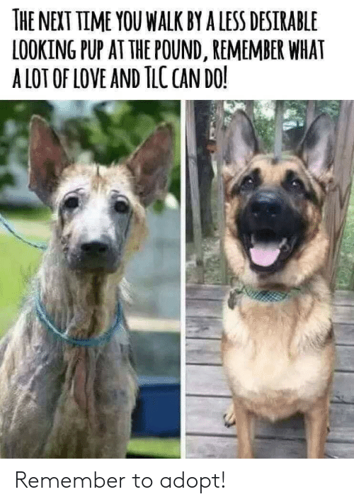 Love, Time, and Pup: THE NEXT TIME YOU WALK BY A LESS DESIRABLE  LOOKING PUP AT THE POUND, REMEMBER WHAT  A LOT OF LOVE AND TLC CAN DO! Remember to adopt!