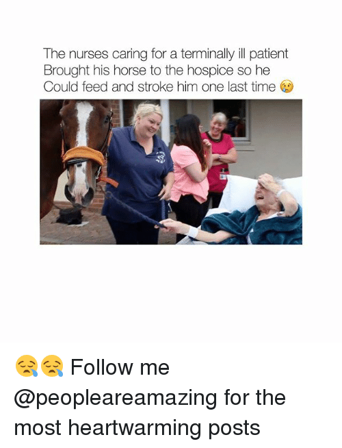 hospice: The nurses caring for a terminally ill patient  Brought his horse to the hospice so he  Could feed and stroke him one last time 😪😪 Follow me @peopleareamazing for the most heartwarming posts