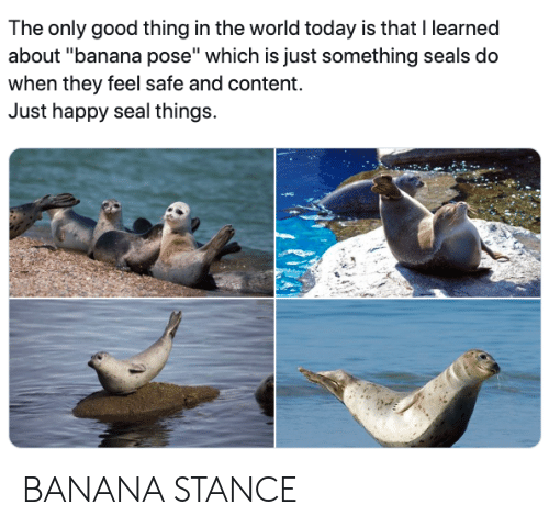 "Banana, Good, and Happy: The only good thing in the world today is that I learned  about ""banana pose"" which is just something seals do  when they feel safe and content.  Just happy seal things. BANANA STANCE"