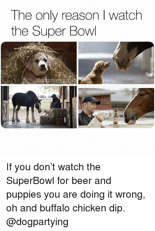 Doing It Wrong: The only reason I watch  the Super Bowl  @dogsbeinebasic If you don't watch the SuperBowl for beer and puppies you are doing it wrong, oh and buffalo chicken dip. @dogpartying