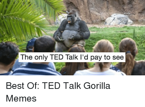 Memes, Ted, and Best: The only TED Talk I'd pay to see <p>Best Of: TED Talk Gorilla Memes</p>