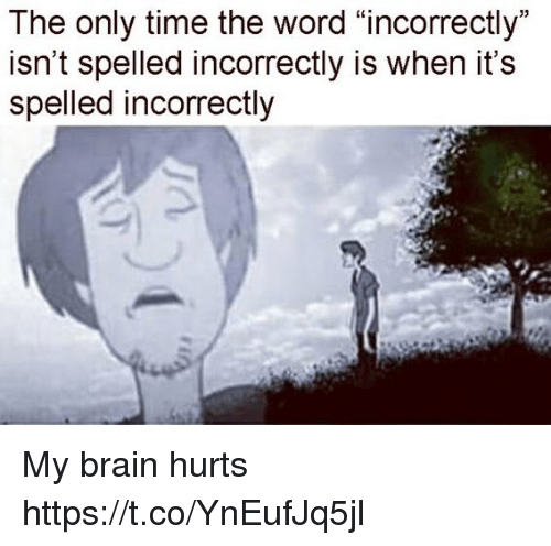 """Memes, Brain, and Time: The only time the word """"incorrectly""""  isn't spelled incorrectly is when it's  spelled incorrectly My brain hurts https://t.co/YnEufJq5jl"""