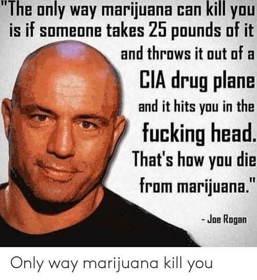 """Joe Rogan: """"The only way marijuana can kill you  is if someone takes 25 pounds of it  and throws it out of a  LIA drug plane  and it hits you in the  fucking head  That's how yau die  from marijuana.""""  - Joe Rogan Only way marijuana kill you"""