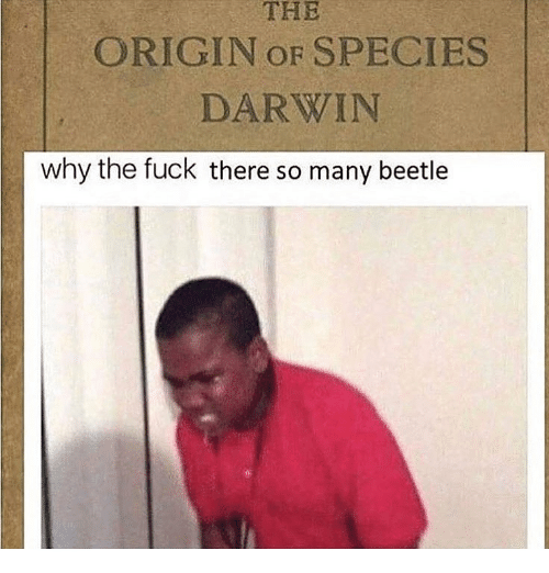 darwin: THE  ORIGIN OF SPECIES  DARWIN  why the fuck there so many beetle