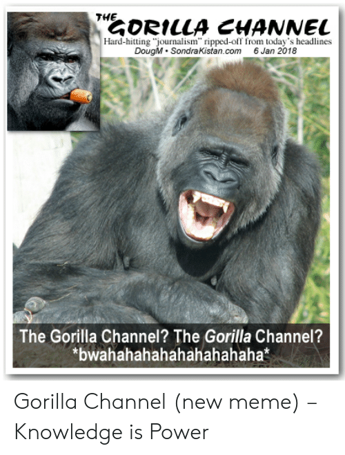"""Gorilla Meme: THE  ORILLA CHANNEL  Hard-hitting """"journalism"""" ripped-off from today's headlines  DougM. SondraKistan.com 6 Jan 2018  The Gorilla Channel? The Gorilla Channel?  *bwahahahahahahahahaha* Gorilla Channel (new meme) – Knowledge is Power"""