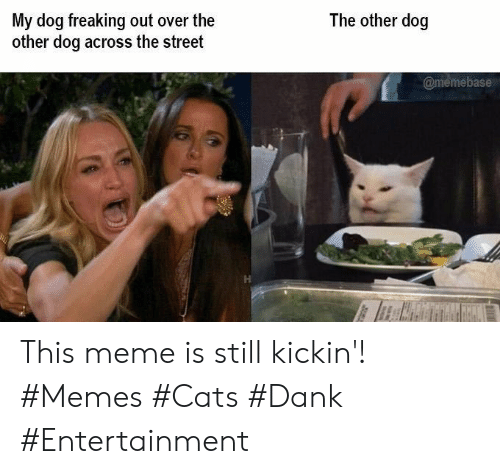 Cats, Dank, and Meme: The other dog  My dog freaking out over the  other dog across the street  @memebase This meme is still kickin'! #Memes #Cats #Dank #Entertainment