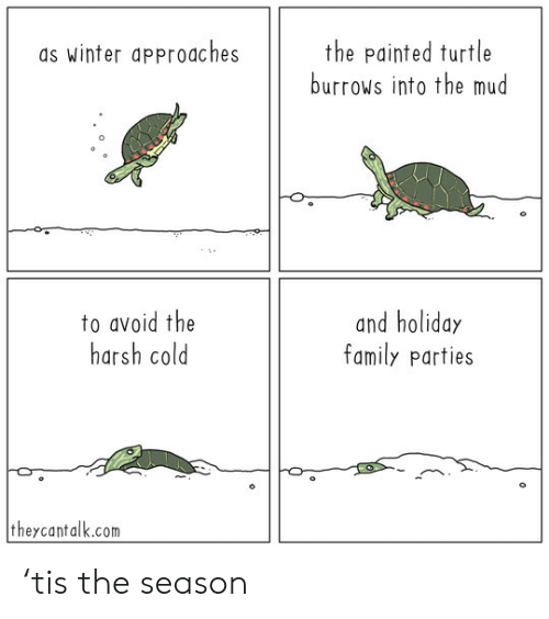 mud: the painted turtle  burrows into the mud  as winter approaches  to avoid the  harsh cold  and holiday  family parties  theycantalk.com 'tis the season