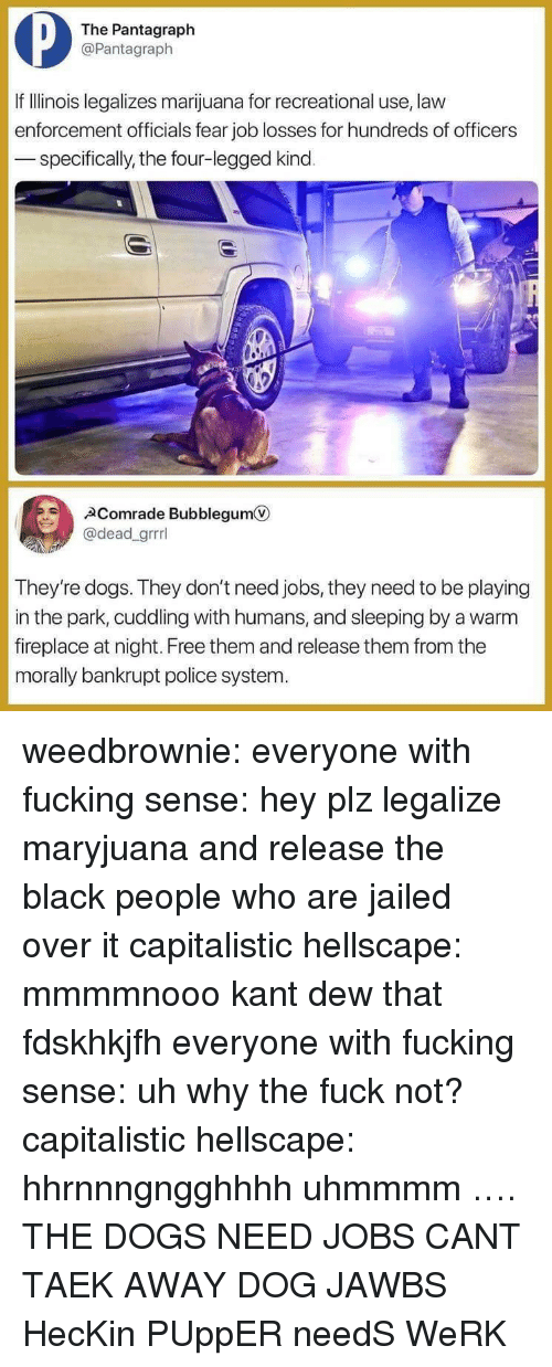 The Black People: The Pantagraph  @Pantagraph  If IlIlinois legalizes marijuana for recreational use, law  enforcement officials fear job losses for hundreds of officers  specifically, the four-legged kind  Comrade Bubblegum  @dead_grrrl  They're dogs. They don't need jobs, they need to be playing  in the park, cuddling with humans, and sleeping by a warm  fireplace at night. Free them and release them from the  morally bankrupt police system. weedbrownie: everyone with fucking sense: hey plz legalize maryjuana and release the black people who are jailed over it capitalistic hellscape: mmmmnooo kant dew that fdskhkjfh everyone with fucking sense: uh why the fuck not? capitalistic hellscape: hhrnnngngghhhh uhmmmm …. THE DOGS NEED JOBS CANT TAEK AWAY DOG JAWBS HecKin PUppER needS WeRK