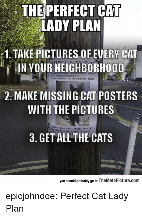Cats, Tumblr, and Blog: THE PERFECT CAT  LADY PLAN  1.TAKE PICTURES OFEVERY CAT  IN YOUR NEIGHBORHOOD  e bouse tho nty be trapped in?  was last ceen in the morming of the 130 a  2. MAKE MISSING CAT POSTERS  WITH THE PICTURES  seen Mistor'or know whore he is  phoom hisw  3. GET ALL THE CATS  you should probably go to TheMetaPicture.com epicjohndoe:  Perfect Cat Lady Plan