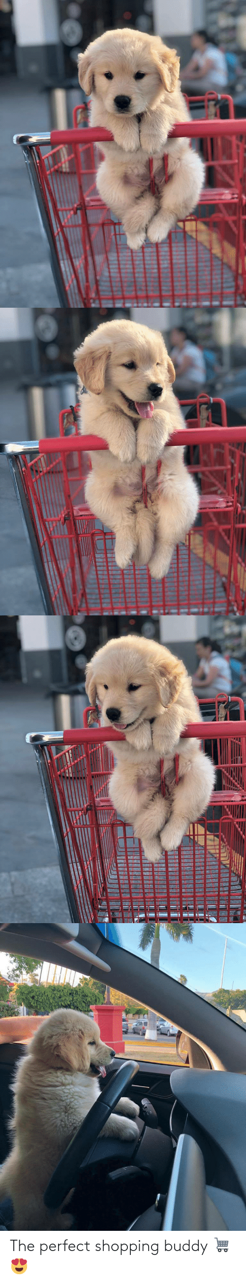Shopping: The perfect shopping buddy 🛒😍