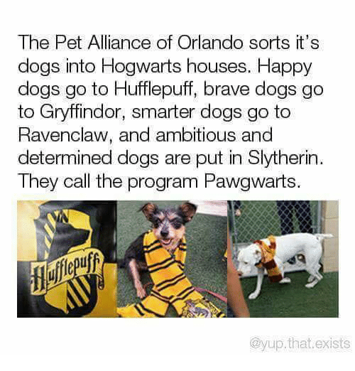 Dogs, Gryffindor, and Memes: The Pet Alliance of Orlando sorts it's  dogs into Hogwarts houses. Happy  dogs go to Hufflepuff, brave dogs go  to Gryffindor, smarter dogs go to  Ravenclaw, and ambitious and  determined dogs are put in Slytherin  They call the program Pawgwarts.  @yup.that.exists
