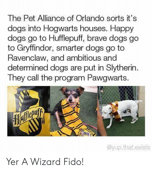 hogwarts: The Pet Alliance of Orlando sorts it's  dogs into Hogwarts houses. Happy  dogs go to Hufflepuff, brave dogs go  to Gryffindor, smarter dogs go to  Ravenclaw, and ambitious and  determined dogs are put in Slytherin  They call the program Pawgwarts.  flefferuyy  AUУ  @yup.that.exists Yer A Wizard Fido!