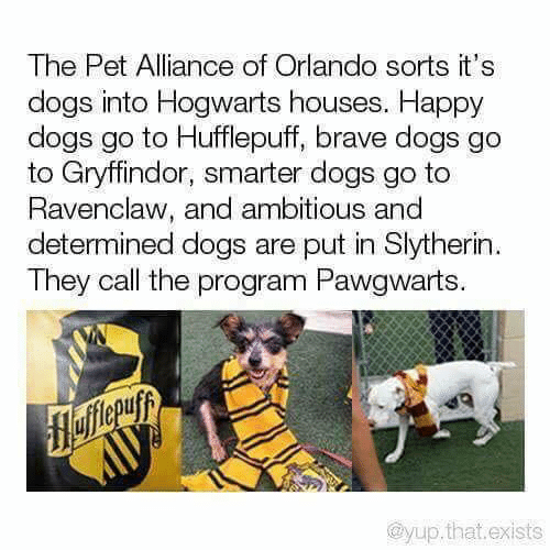 hogwarts: The Pet Alliance of Orlando sorts it's  dogs into Hogwarts houses. Happy  dogs go to Hufflepuff, brave dogs go  to Gryffindor, smarter dogs go to  Ravenclaw, and ambitious and  determined dogs are put in Slytherin  They call the program Pawgwarts.  flefferuyy  @yup.that.exists