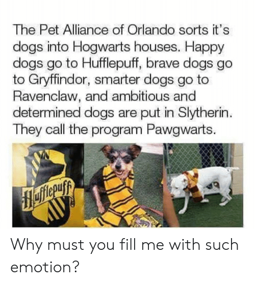 hogwarts: The Pet Alliance of Orlando sorts it's  dogs into Hogwarts houses. Happy  dogs go to Hufflepuff, brave dogs go  to Gryffindor, smarter dogs go to  Ravenclaw, and ambitious and  determined dogs are put in Slytherin  They call the program Pawgwarts. Why must you fill me with such emotion?