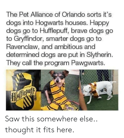 hogwarts: The Pet Alliance of Orlando sorts it's  dogs into Hogwarts houses. Happy  dogs go to Hufflepuff, brave dogs go  to Gryffindor, smarter dogs go to  Ravenclaw, and ambitious and  determined dogs are put in Slytherin  They call the program Pawgwarts. Saw this somewhere else.. thought it fits here.