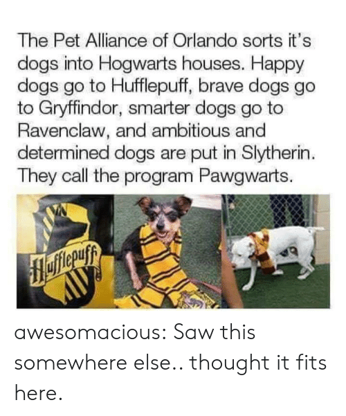 hogwarts: The Pet Alliance of Orlando sorts it's  dogs into Hogwarts houses. Happy  dogs go to Hufflepuff, brave dogs go  to Gryffindor, smarter dogs go to  Ravenclaw, and ambitious and  determined dogs are put in Slytherin  They call the program Pawgwarts. awesomacious:  Saw this somewhere else.. thought it fits here.