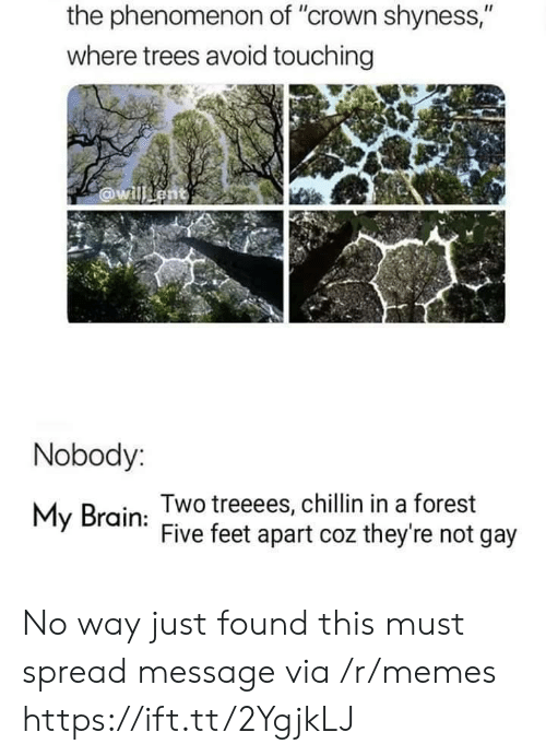 "Not Gay: the phenomenon of ""crown shyness,""  where trees avoid touching  @willent  Nobody:  Two treeees, chillin in a forest  Five feet apart coz they're not gay  My Brain No way just found this must spread message via /r/memes https://ift.tt/2YgjkLJ"