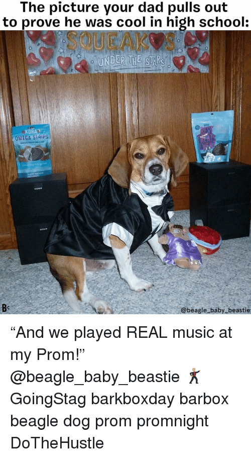 """Omega: The picture your dad pulls out  to prove he was cool in high school  SQUEAKOS  UNDER THE SI  ARK  KOHA  OMEGA SİRİPS  Bs  @beagle baby beastie """"And we played REAL music at my Prom!"""" @beagle_baby_beastie 🕺 GoingStag barkboxday barbox beagle dog prom promnight DoTheHustle"""
