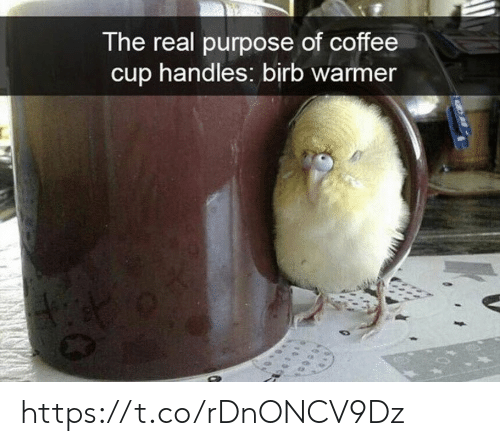 birb: The real purpose of coffee  cup handles: birb warmer https://t.co/rDnONCV9Dz