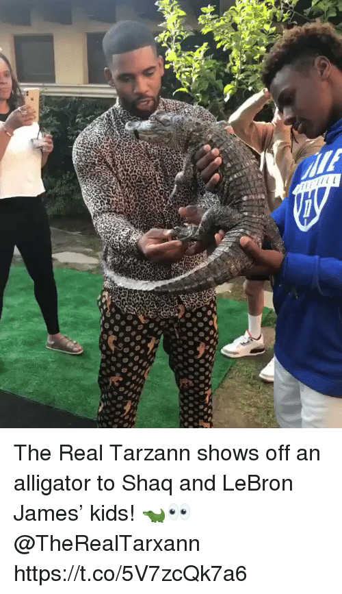 LeBron James, Shaq, and Alligator: The Real Tarzann shows off an alligator to Shaq and LeBron James' kids! 🐊👀@TheRealTarxann https://t.co/5V7zcQk7a6