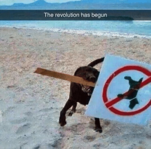 Begun: The revolution has begun