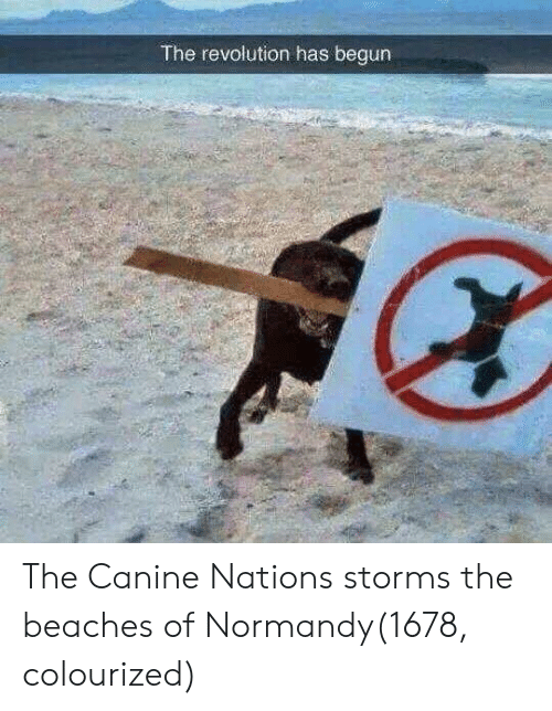 Revolution, Beaches, and Normandy: The revolution has begun The Canine Nations storms the beaches of Normandy(1678, colourized)
