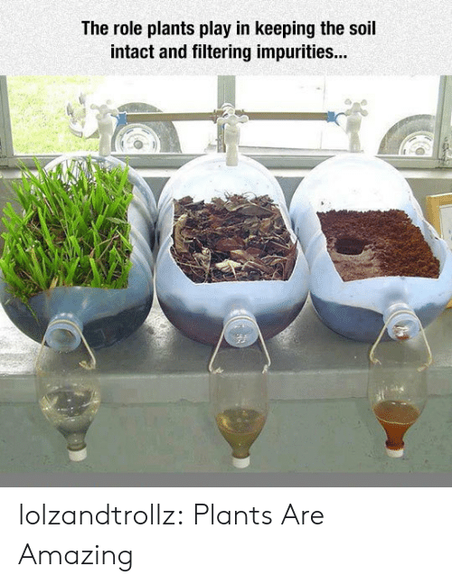Tumblr, Blog, and Amazing: The role plants play in keeping the soil  intact and filtering impurities... lolzandtrollz:  Plants Are Amazing