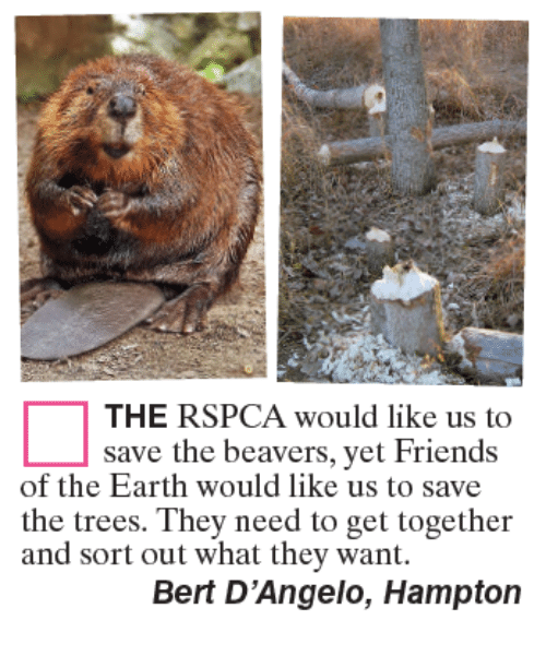 Rspca: THE RSPCA would like us to  save the beavers, yet Friends  the trees. They need to get together  Bert D'Angelo, Hampton  of the Earth would like us to save  and sort out what they want.