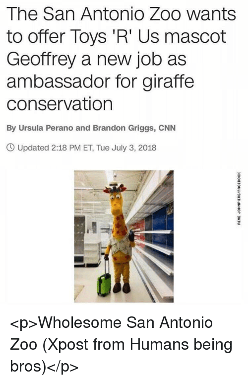San Antonio: The San Antonio Zoo wants  to offer Toys 'R' Us mascot  Geoffrey a new job as  ambassador for giraffe  conservation  By Ursula Perano and Brandon Griggs, CNN  O Updated 2:18 PM ET, Tue July 3, 2018 <p>Wholesome San Antonio Zoo (Xpost from Humans being bros)</p>