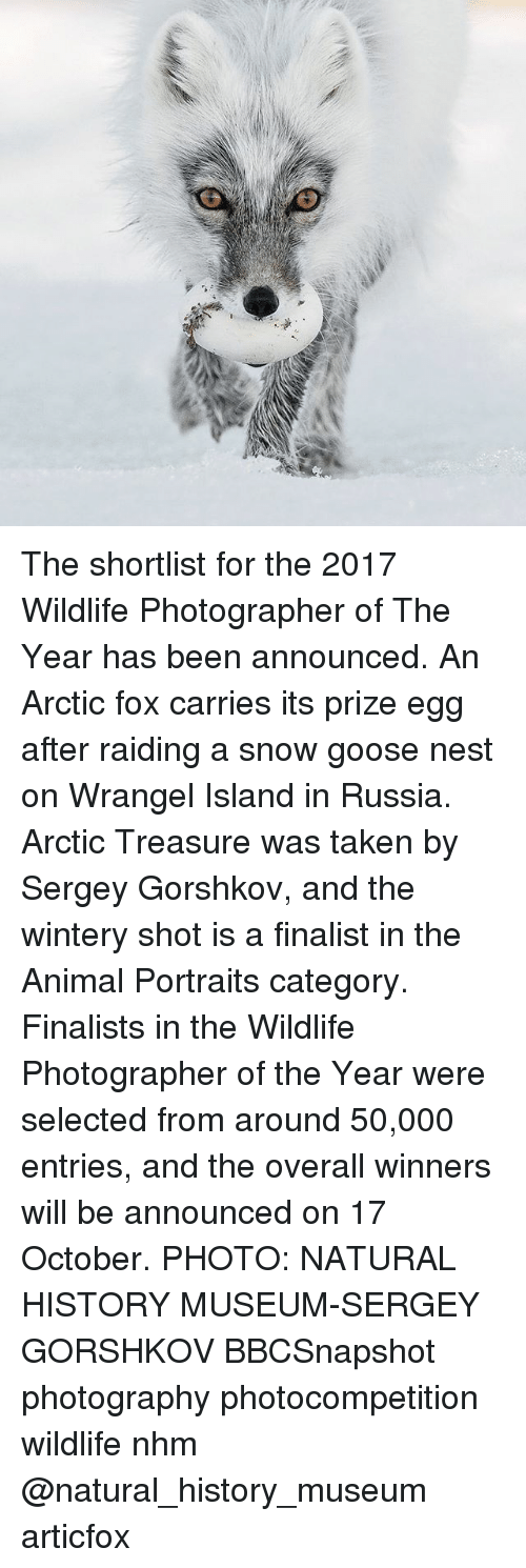 nesting: The shortlist for the 2017 Wildlife Photographer of The Year has been announced. An Arctic fox carries its prize egg after raiding a snow goose nest on Wrangel Island in Russia. Arctic Treasure was taken by Sergey Gorshkov, and the wintery shot is a finalist in the Animal Portraits category. Finalists in the Wildlife Photographer of the Year were selected from around 50,000 entries, and the overall winners will be announced on 17 October. PHOTO: NATURAL HISTORY MUSEUM-SERGEY GORSHKOV BBCSnapshot photography photocompetition wildlife nhm @natural_history_museum articfox