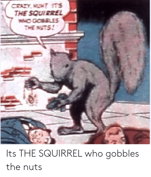Squirrel, Who, and Nuts: THE SQUIRRE  THE NUTS! Its THE SQUIRREL who gobbles the nuts