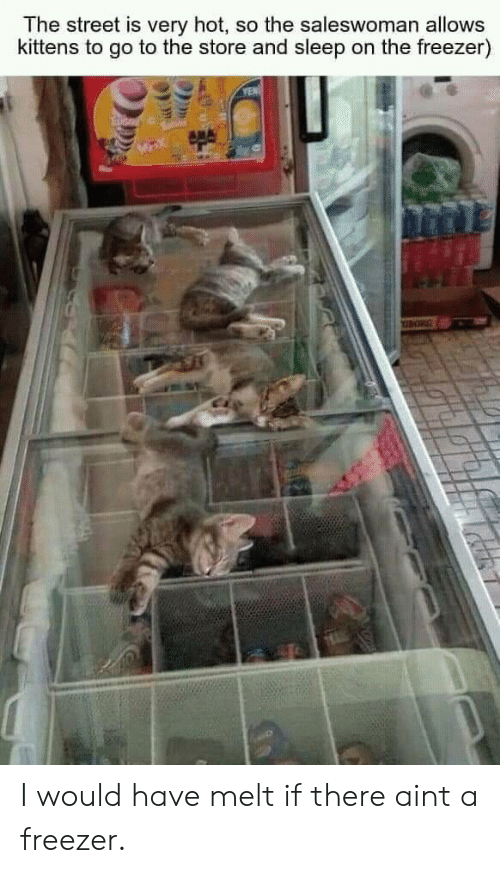 yen: The street is very hot, so the saleswoman allows  kittens to go to the store and sleep on the freezer)  YEN I would have melt if there aint a freezer.