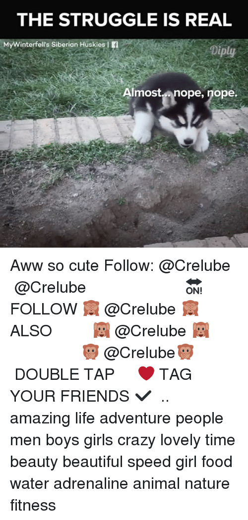 Awwe: THE STRUGGLE IS REAL  MyWinterfell's Siberian Huskies f  Diply  Almostnope, nope.  Ain Aww so cute Follow: @Crelube ⠀⠀⠀⠀ ⠀@Crelube ⠀⠀⠀⠀ ⠀⠀ ⠀⠀⠀⠀⠀ ⠀⠀🔛FOLLOW 🙈 @Crelube 🙈 ⠀⠀⠀⠀ ⠀⠀⠀⠀⠀⠀ALSO ⠀ 🙉 @Crelube 🙉 ⠀ ⠀⠀ ⠀ ⠀ ⠀ ⠀ ⠀ ⠀⠀⠀⠀⠀ 🙊 @Crelube🙊 ⠀⠀⠀⠀ ⠀ ⠀⠀⠀⠀ DOUBLE TAP ❤️ TAG YOUR FRIENDS ✔️ ⠀⠀⠀⠀ .. amazing life adventure people men boys girls crazy lovely time beauty beautiful speed girl food water adrenaline animal nature fitness