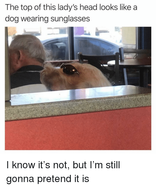 wearing sunglasses: The top of this lady's head looks like a  dog wearing sunglasses I know it's not, but I'm still gonna pretend it is
