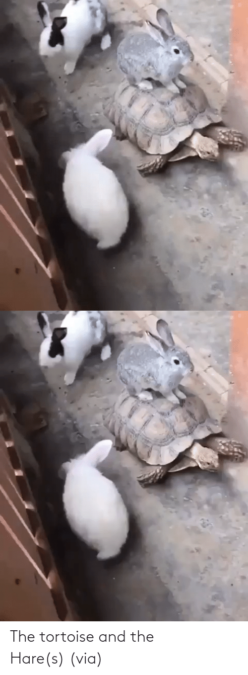 Animal: The tortoise and the Hare(s) (via)